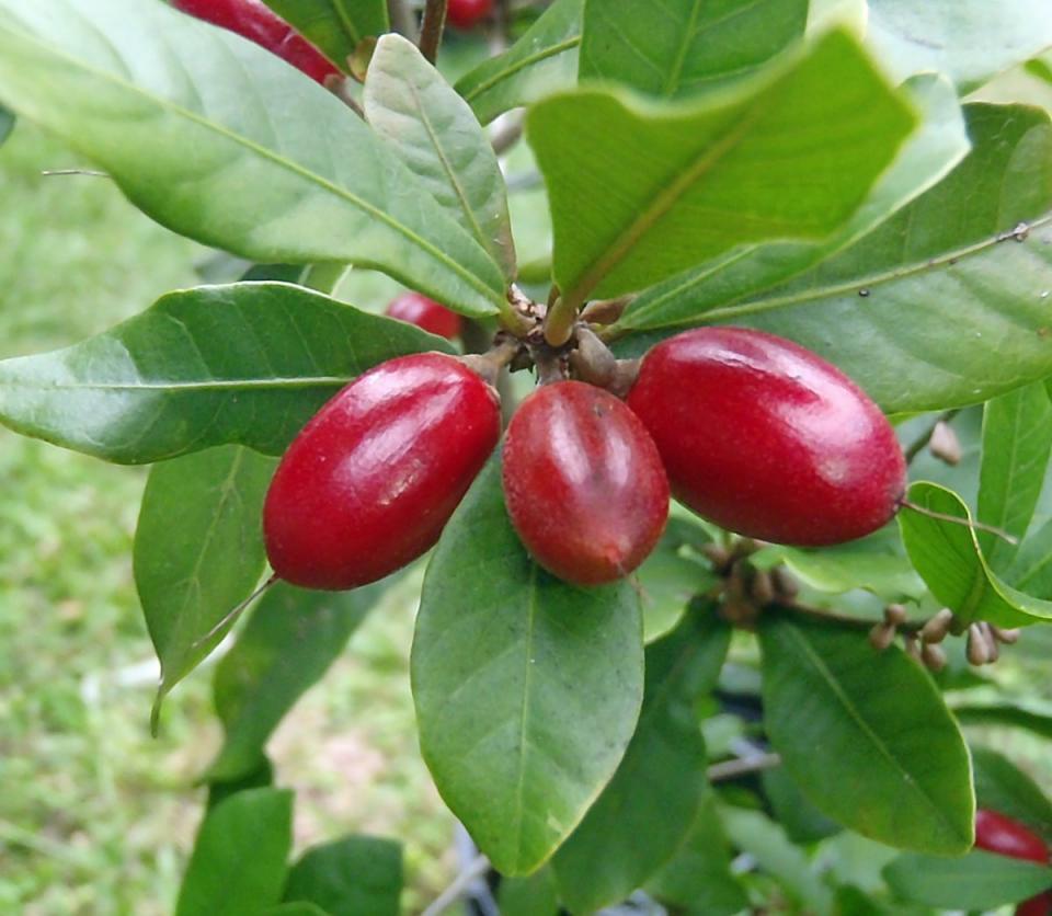 Самые вкусные фрукты, которые вам вряд ли доводилось пробовать