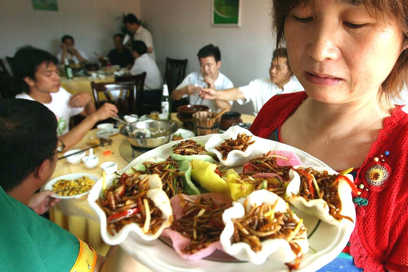Употребление насекомых в пищу